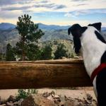 "Chance explores Pike's Peak. As his owner says, ""he took a leak on Pike's Peak"""