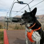 Oreo, contemplating a ride on the ski lift.